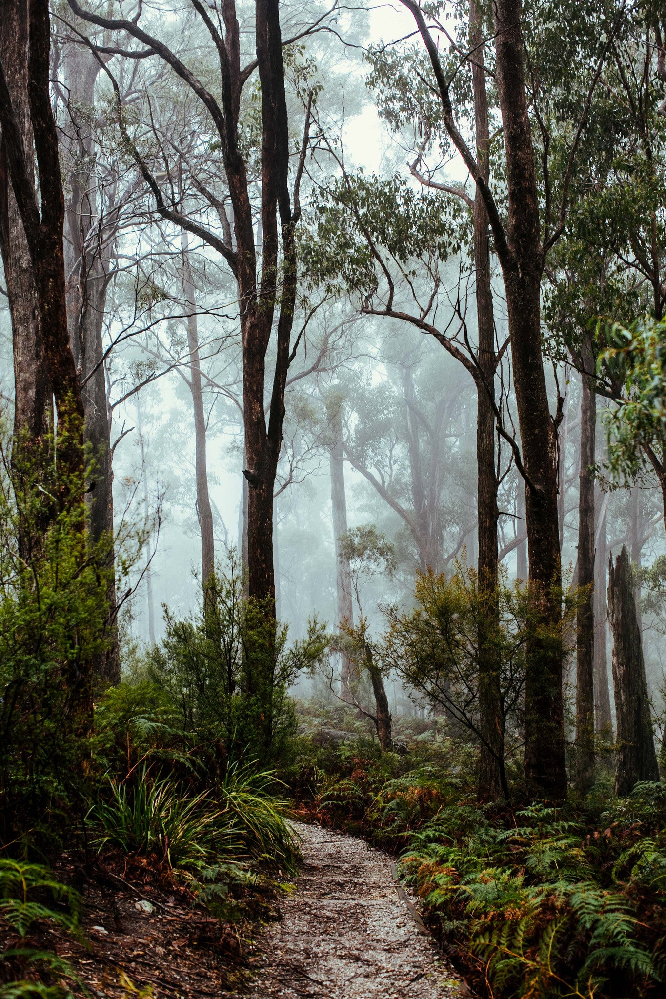 Tasmanian Rainforest Photographic Print