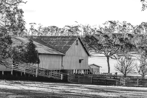 Australian Sheep Shed Photographic Print