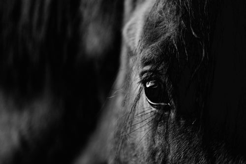 Stanley the Horse IV B+W  Photographic Print