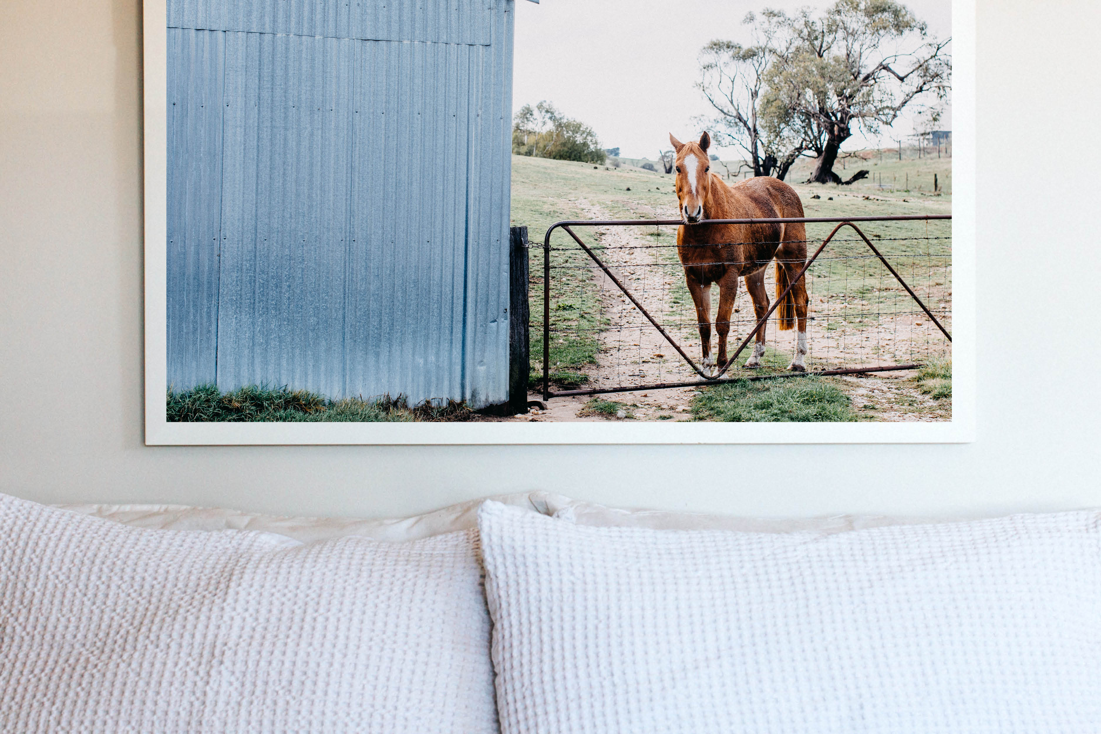 Alice the Horse Photographic Print