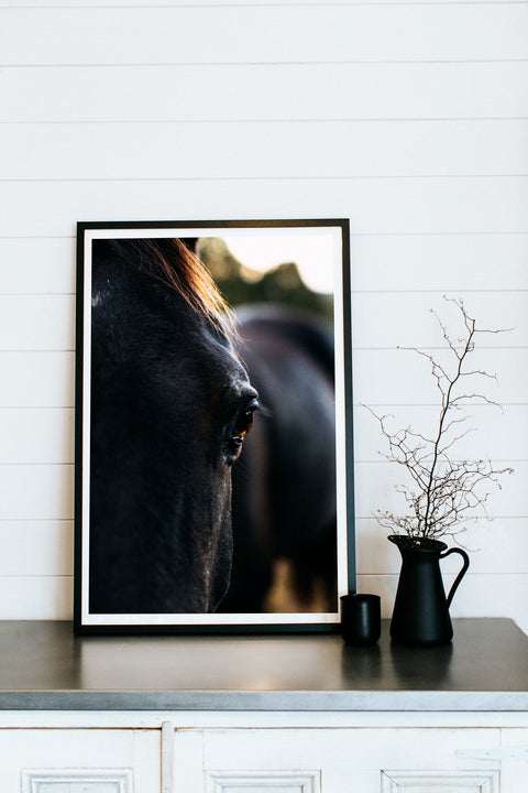 Van Diemens Land Bernard the Black Horse II Photographic Print