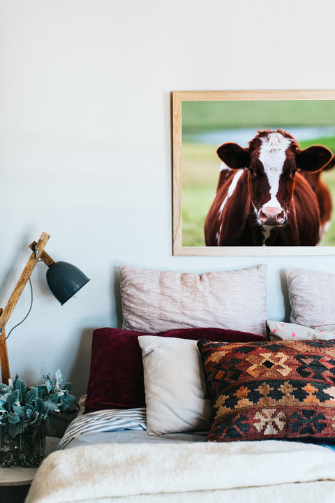 Betty Cow Photographic Print