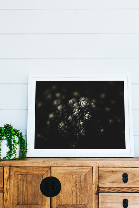 Botanical Mountain Succulent Photographic Print