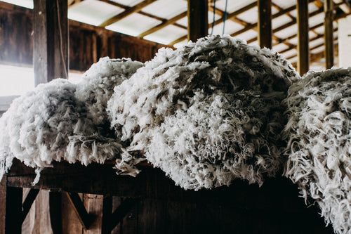 Wool Bundle II Photographic Print
