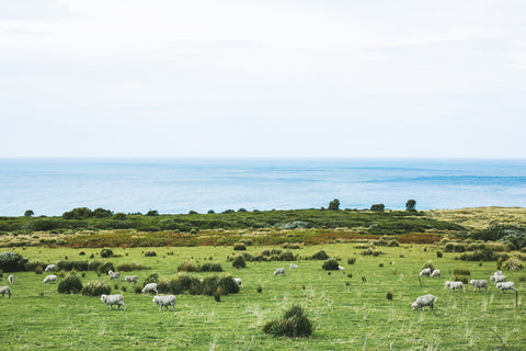 Sheep By The Waves Photographic Print
