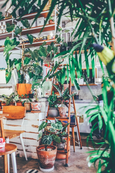 Plants That Purify Your Space