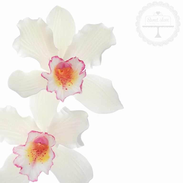 Dec-14---Berry-Wedding-Orchid-web