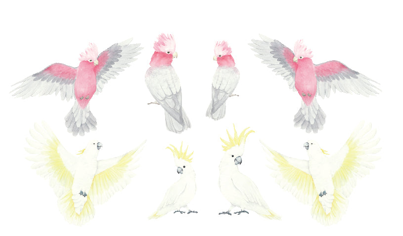 Watercolour Galahs