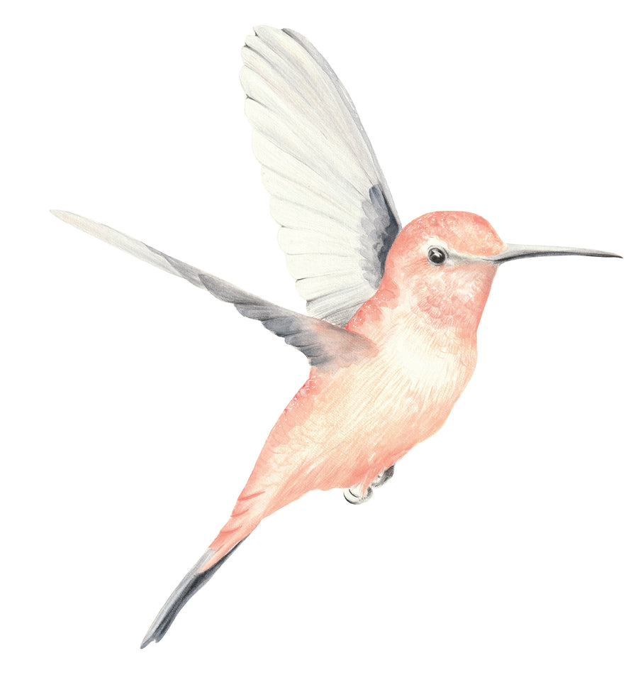 EXCLUSIVE RANGE - Watercolour Hummingbirds