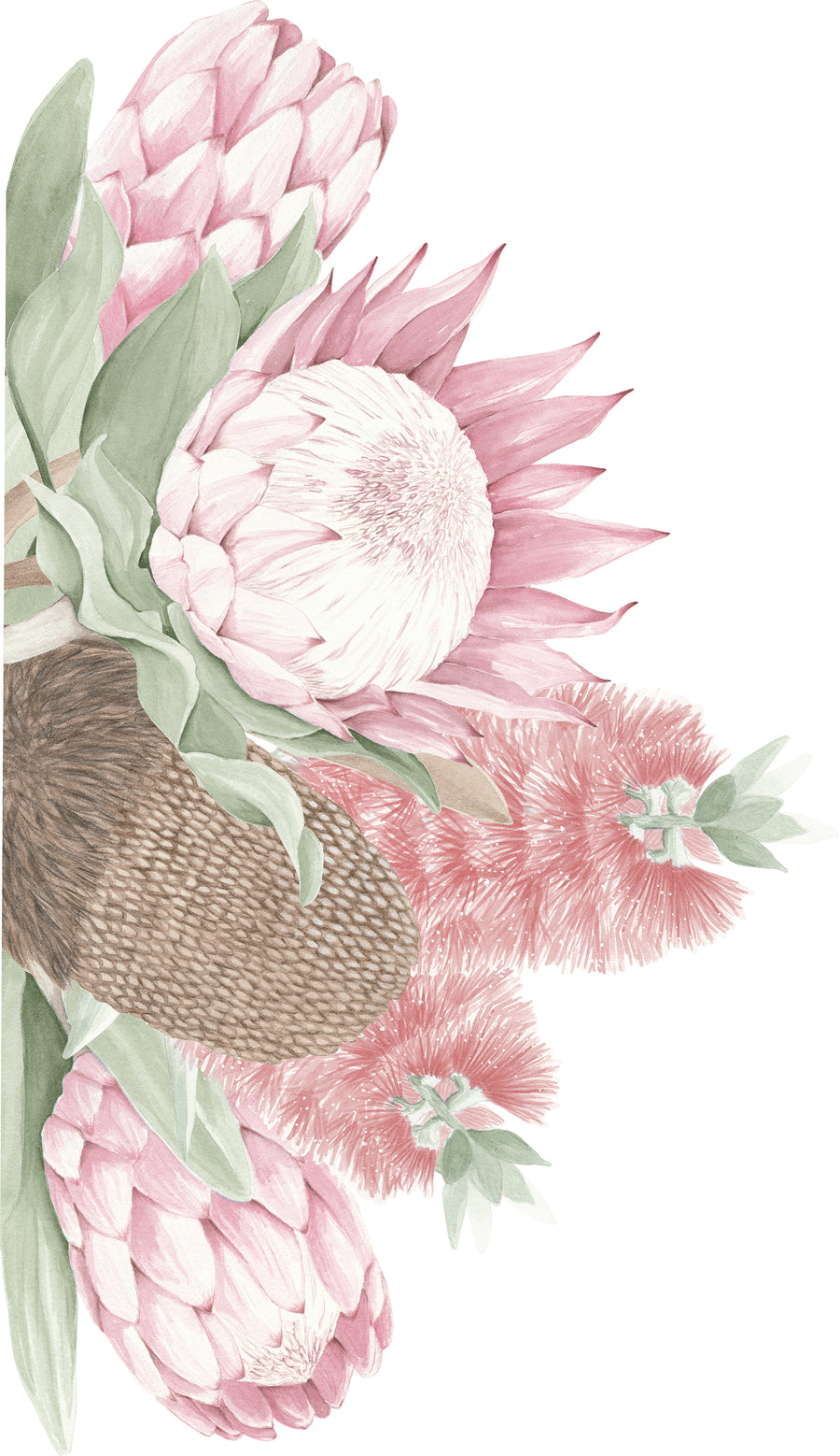 Protea, Bottlebrush & Banksia Wall Mural