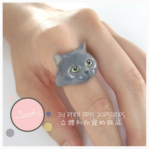 British Short Hair Cat Colored ring put on finger