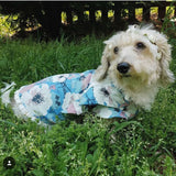 Floral Chambray Dog Dress | Peony