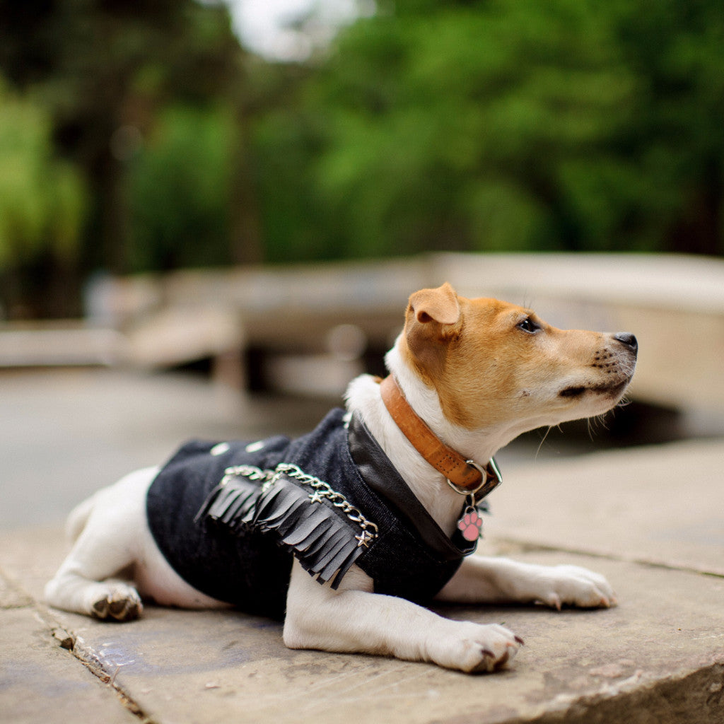 Dog Vest by Elikko