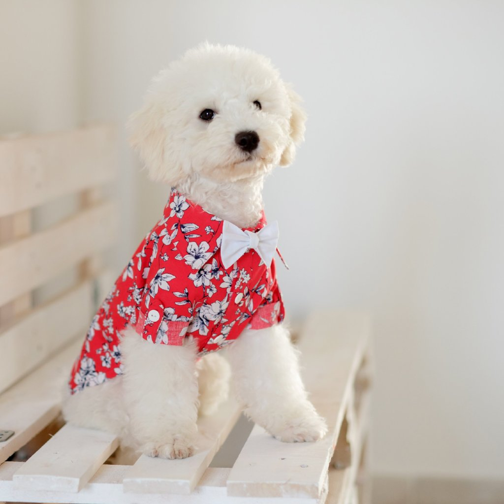 Red Dog Shirt