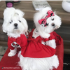 Disney Mickey and Minnie Mouse Outfit for Dogs