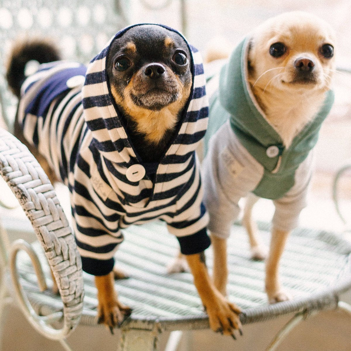 Sweaters for Dogs