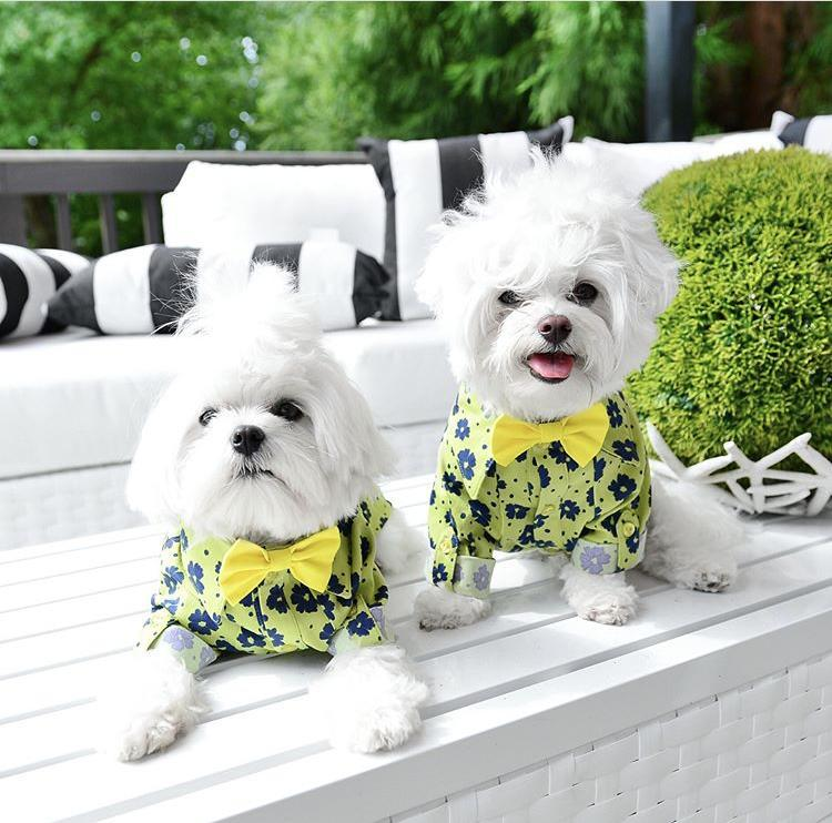 Cute Shirts for Dogs