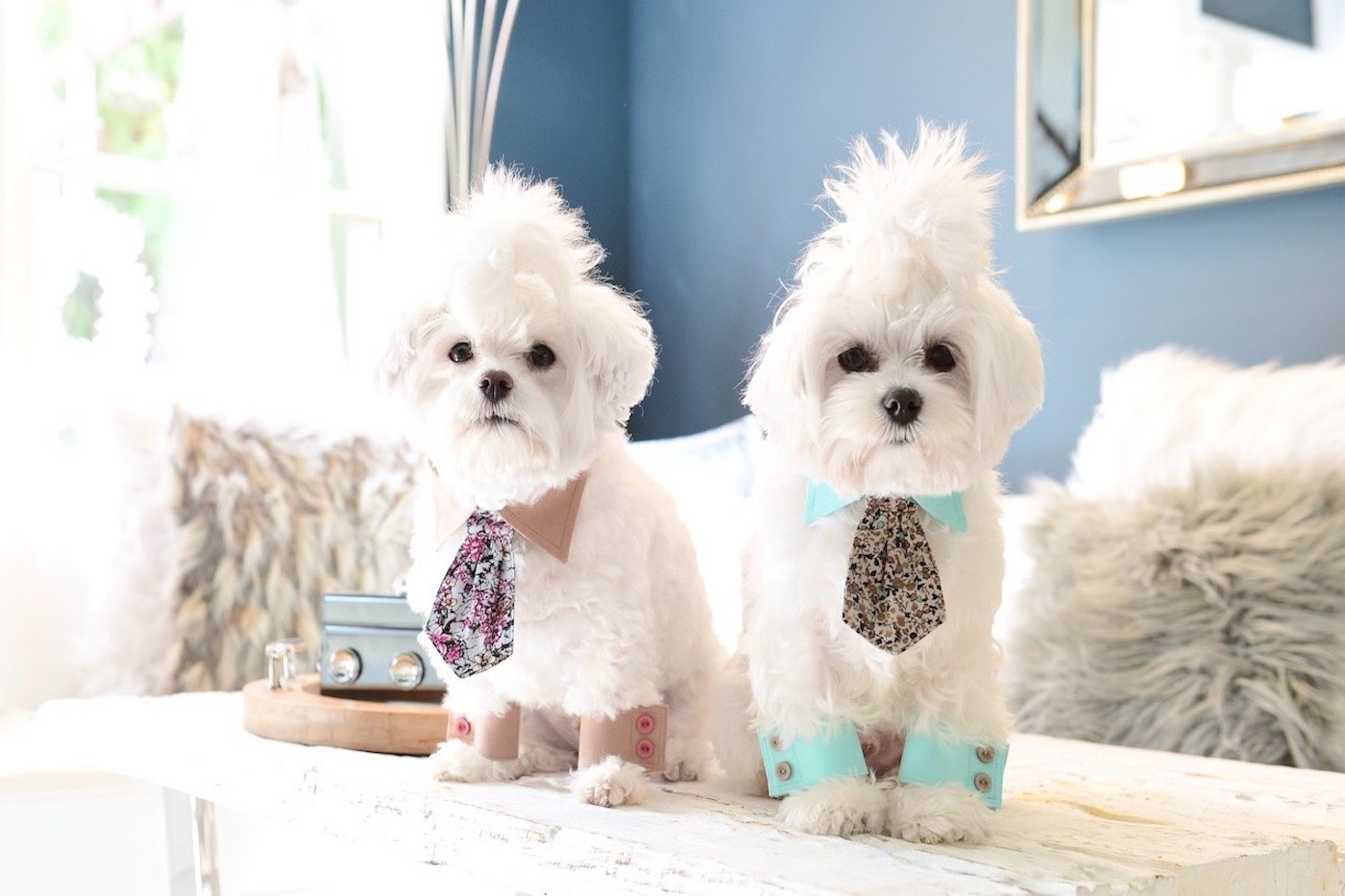 bow tie and cuff set for dogs