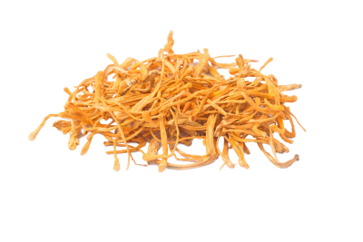 Organic cordyceps from China