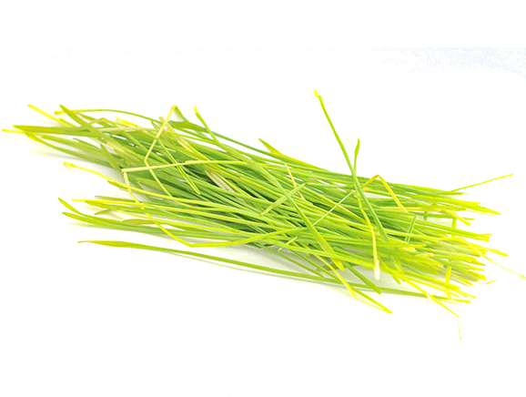 Barley Grass from Germany - YourSuperFoods Ingredient