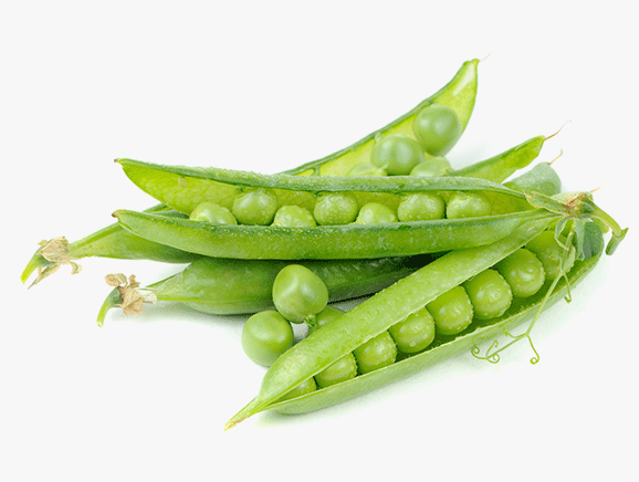 Pea Protein from Rural China - YourSuperFoods Ingredient