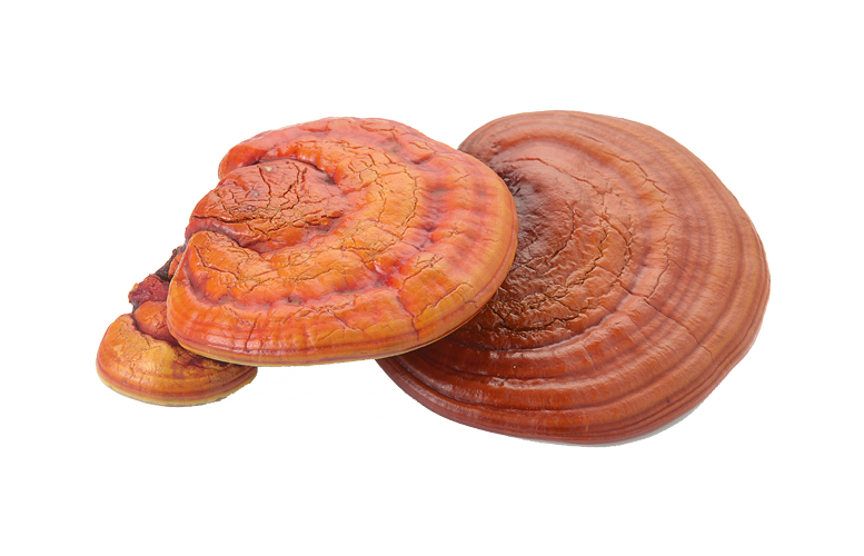 Reishi from China - YourSuperFoods Ingredient