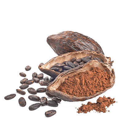 Organic Cacao from Peru