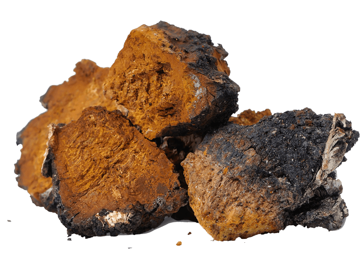 Organic Chaga from China