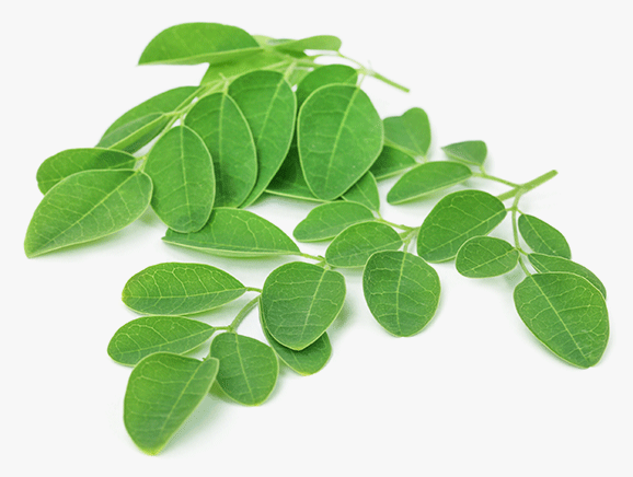 Moringa from Tanzania - YourSuperFoods Ingredient