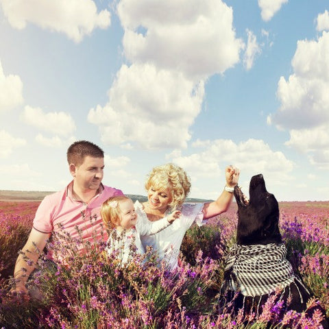 Make Mum Lavender Happy Promo