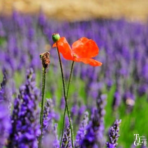 Lest We Forget...Anzac Day 2020 at Tasmanian Lavender Gifts