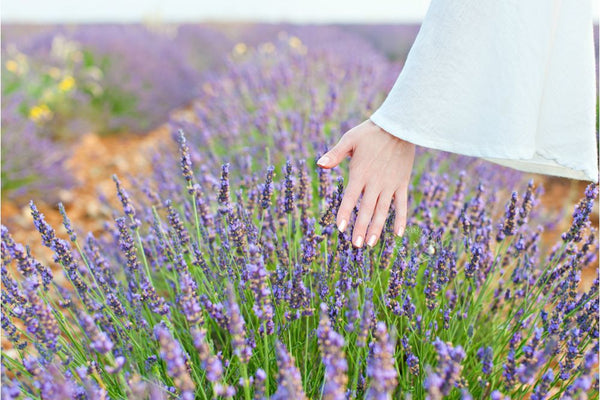 Get in Touch with Tasmanian Lavender Gifts