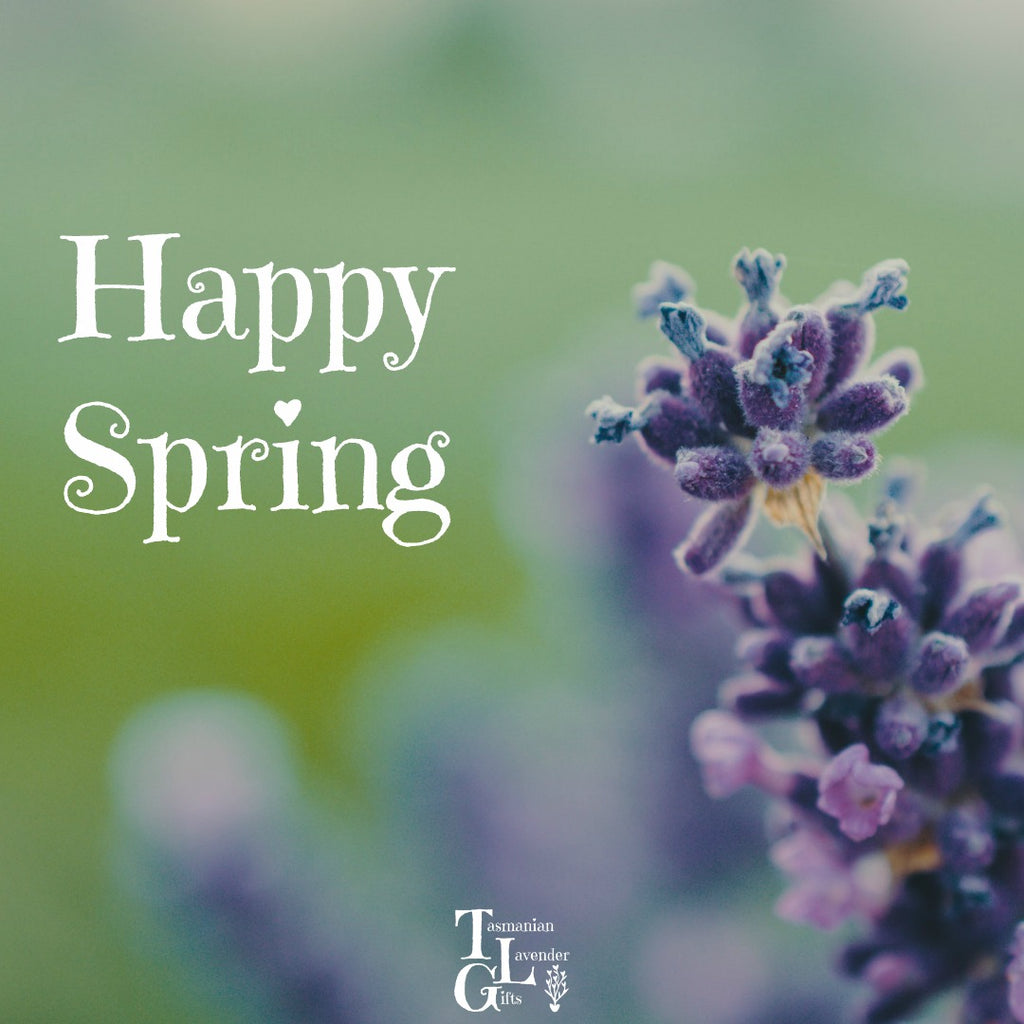 Happy Spring from Tasmanian Lavender Gifts