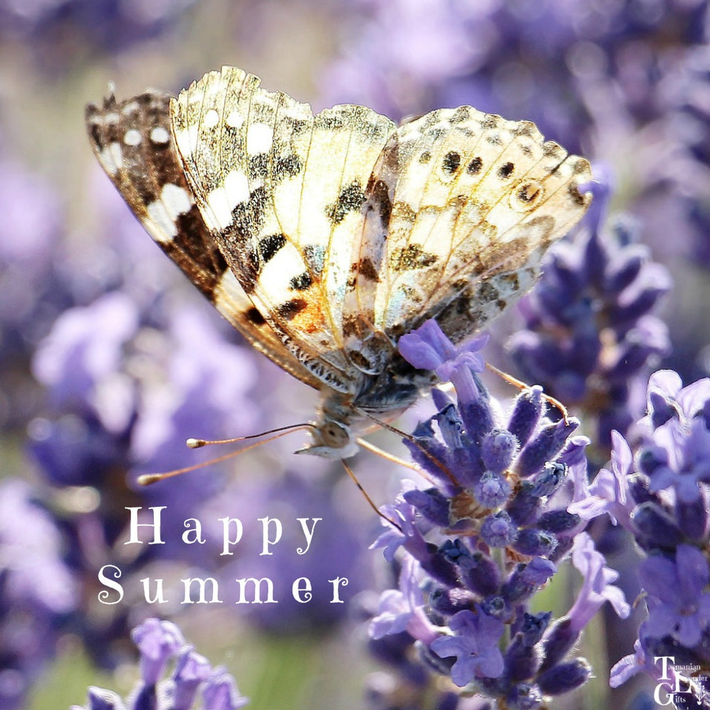 Happy Summer from Tasmanian Lavender Gifts