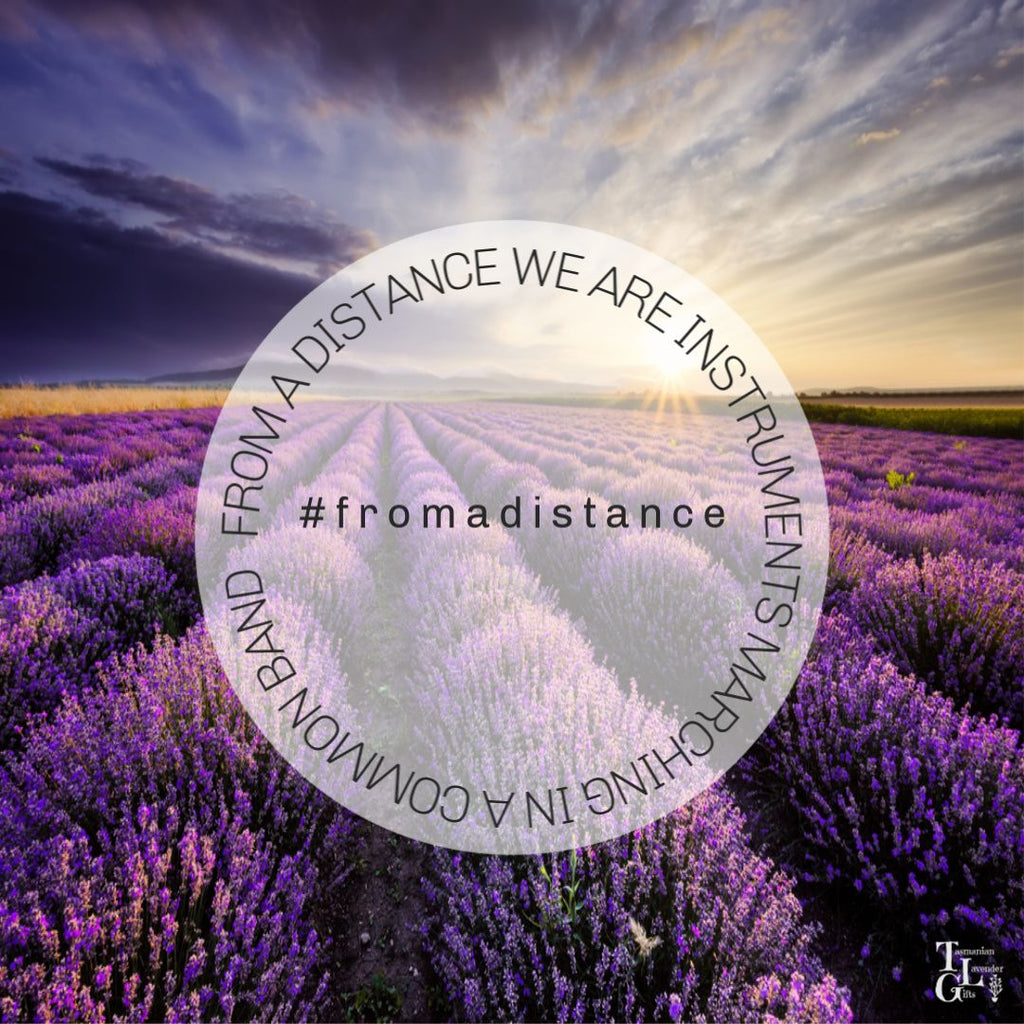 Lavender Love From a Distance at Tasmanian Lavender Gifts Hobart Tasmania