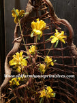 #MGFS Golden Yellow Flower Bouquet