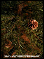 #CPT1 Cypress Pine Tree In Burlap