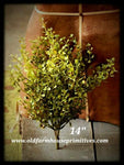 "#BG3 Baby's Grass Bush 14"" #1 Seller"
