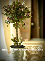 "#LHHW5 22"" Potted Holly Berry Topiary"