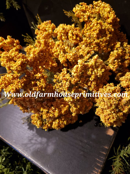 #RH71 Mustard Yellow Queen Annes Lace Bush