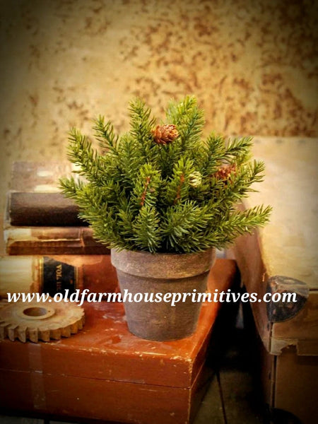 #LHHH12 White Spruce Potted Half Sphere Plant 9""