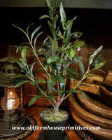 "#RH53 19"" Potted Olive Plant"