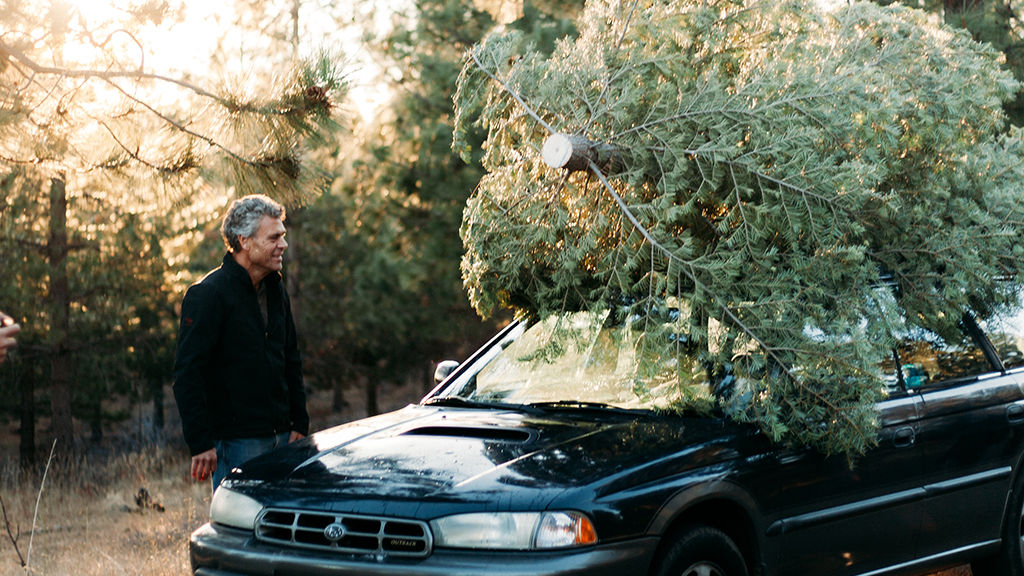 A man looking at a Christmas tree on a car roof