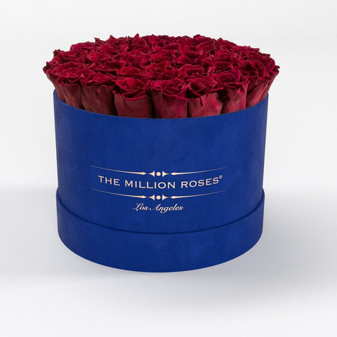 Premium - Red Eternity Roses - Royal Blue Suede Box