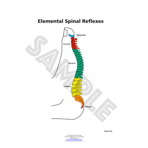ER Spinal Reflexes Chart by Dr. Mary Jo Ruggieri