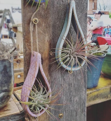 Air Plant Holder - TEARDROP