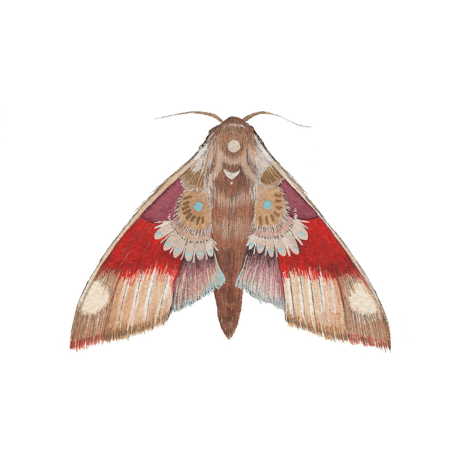 Print 5x7 - Collector: Moth 5