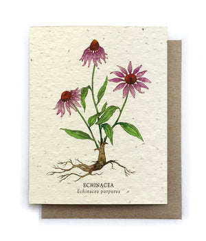 The Bower Studio-  Echinacea Botanical Greeting Cards Plantable Seed Paper