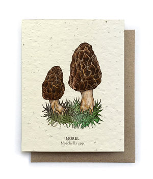 The Bower Studio - Morel Wild Mushroom Greeting Cards - Plantable Seed Paper
