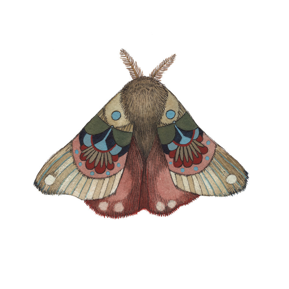 Collector: Moth 3 - 5x7 Print